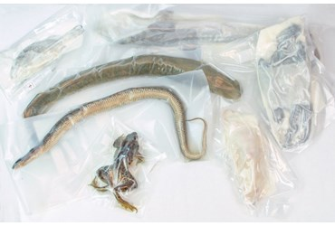 Preserved Specimen Survey Sets for Dissection