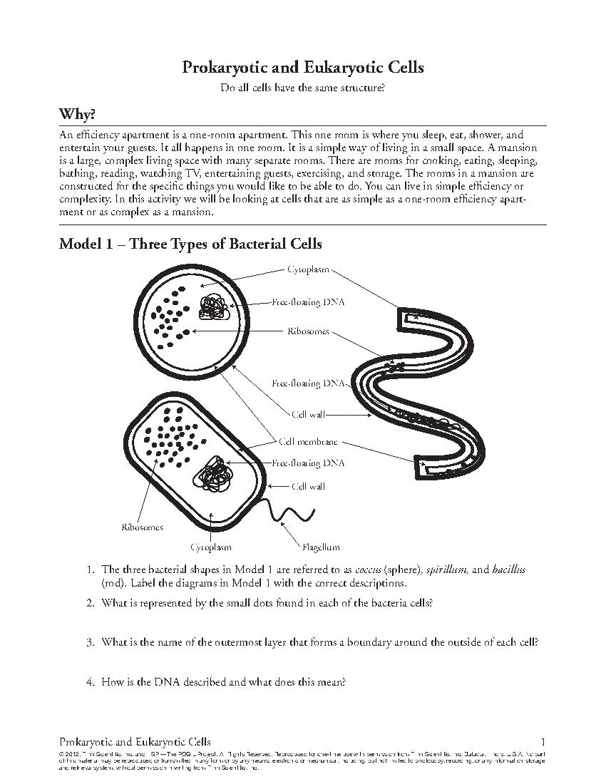 Prokaryotic Vs Eukaryotic Cells