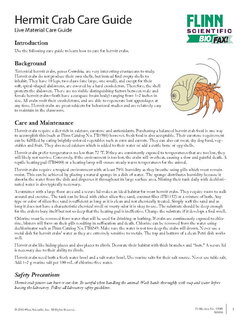 Hermit Crab Care Guide