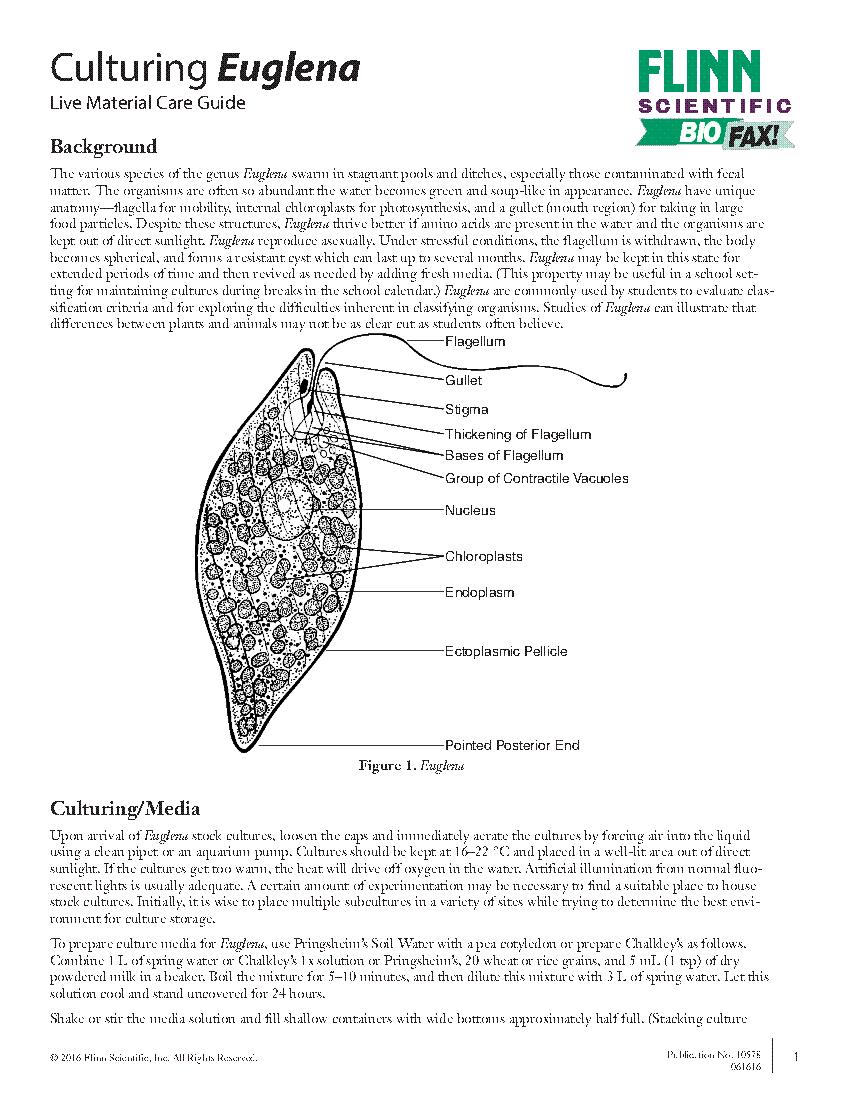 Beste Anatomie Euglena Zeitgenössisch - Anatomie Ideen - finotti.info